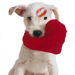 Valentines-Day-Gift-topelvit
